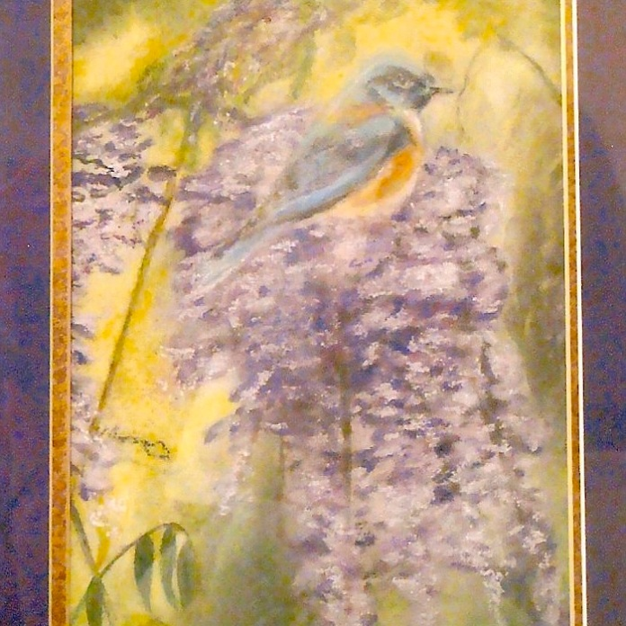 Bluebird in Wisteria