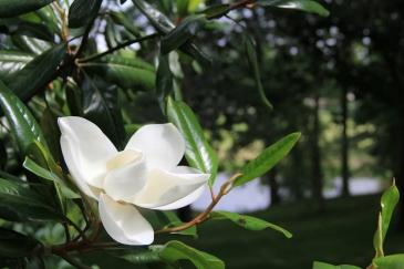 Yard Photograph-Summer Bloom