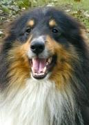 Sage's Smile