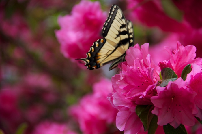 We Always Have Spring